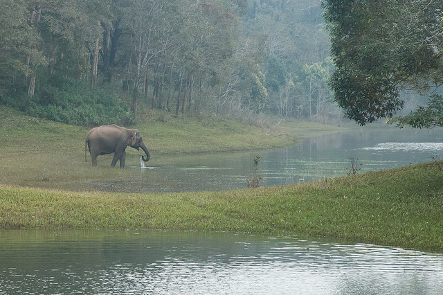 Kerala Points Interest 6- Thekkady