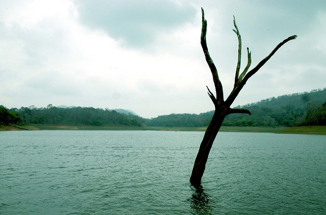 one day trip to thekkady