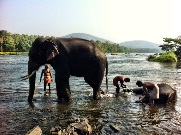 elephant-bathing-kodanad